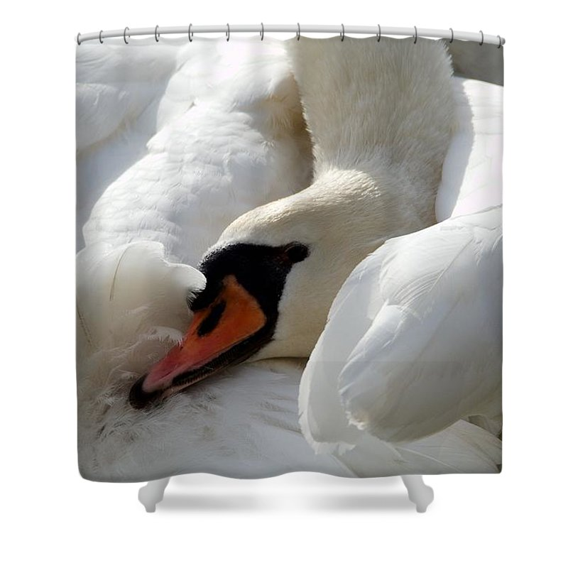 Swans Shower Curtain featuring the photograph Nestled In by Melissa Cory