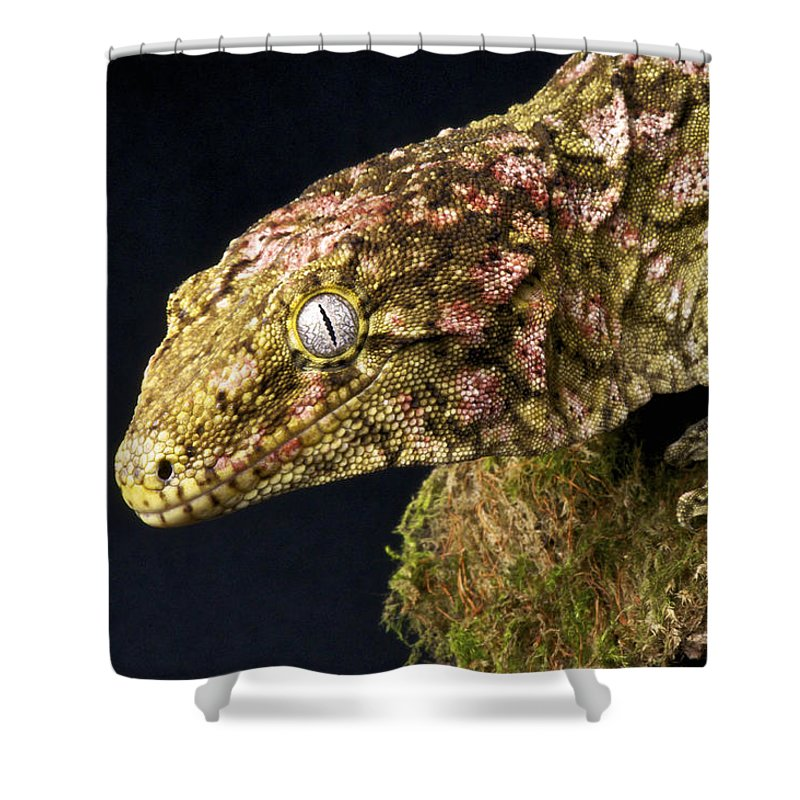 New Caledonia Shower Curtain featuring the photograph New Caledonian Giant Gecko by Reptiles4all