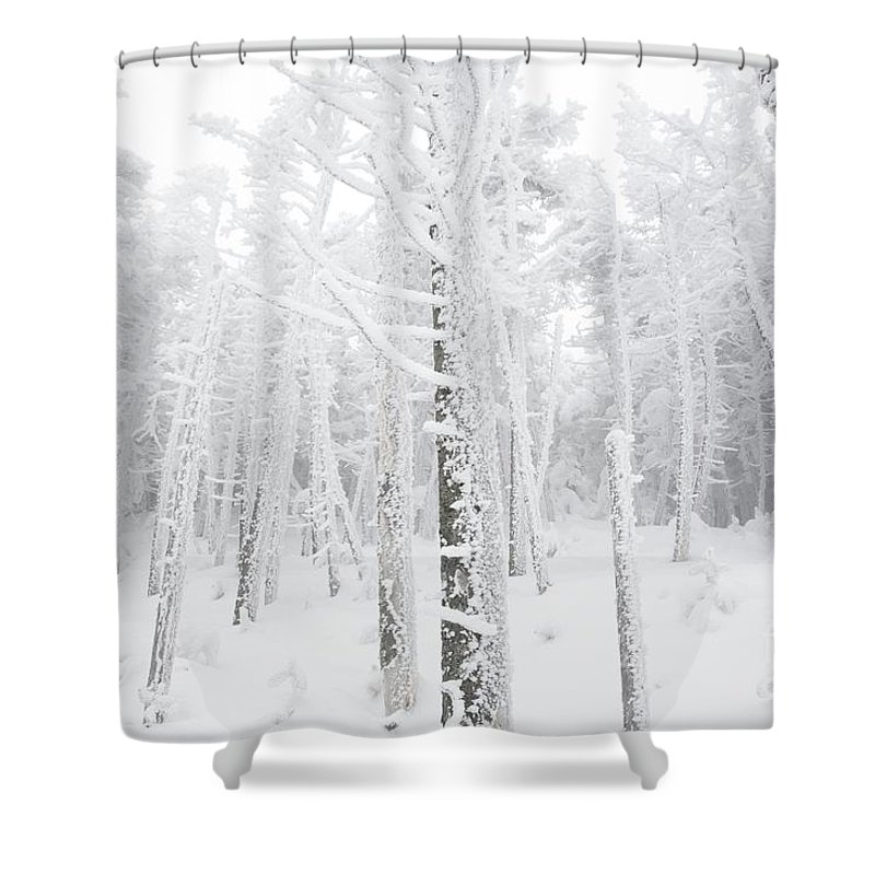 Snow Covered Shower Curtain featuring the photograph New England - Snow Covered Forest by Erin Paul Donovan