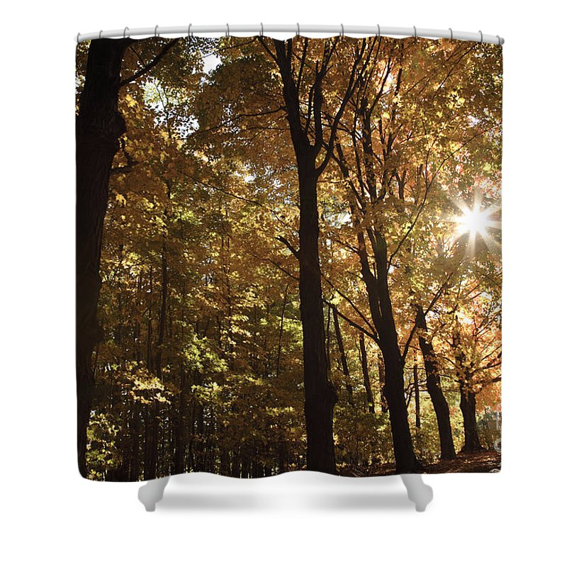 Forest Canopy Shower Curtain featuring the photograph New England Autumn Forest by Erin Paul Donovan