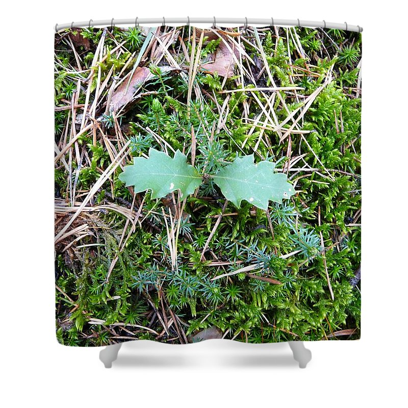 Tree Shower Curtain featuring the photograph New Life by Valerie Ornstein