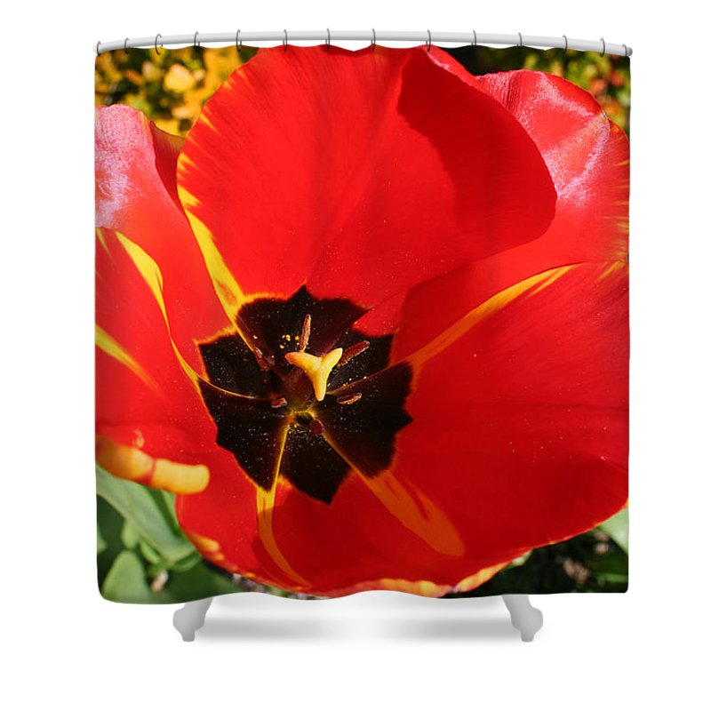 Red Tulips Shower Curtain featuring the photograph New Spring Beginnings by Mary Gaines