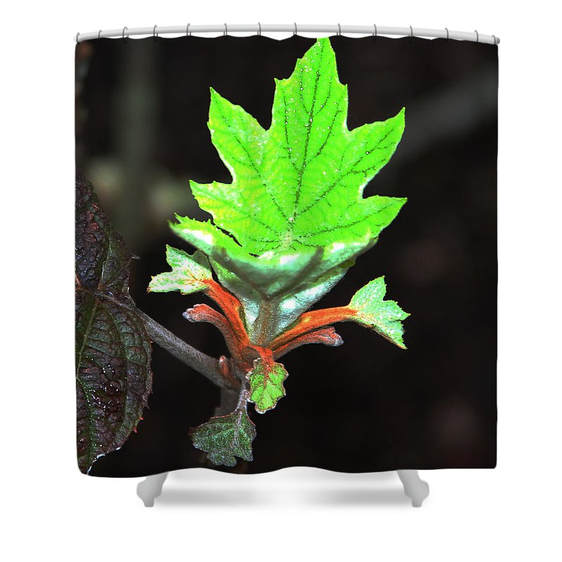 New Spring Leaf Shower Curtain featuring the photograph New Spring Leaf by Tom Janca