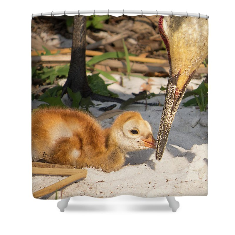 Baby Bird Shower Curtain featuring the photograph New Sunny Day by Zina Stromberg