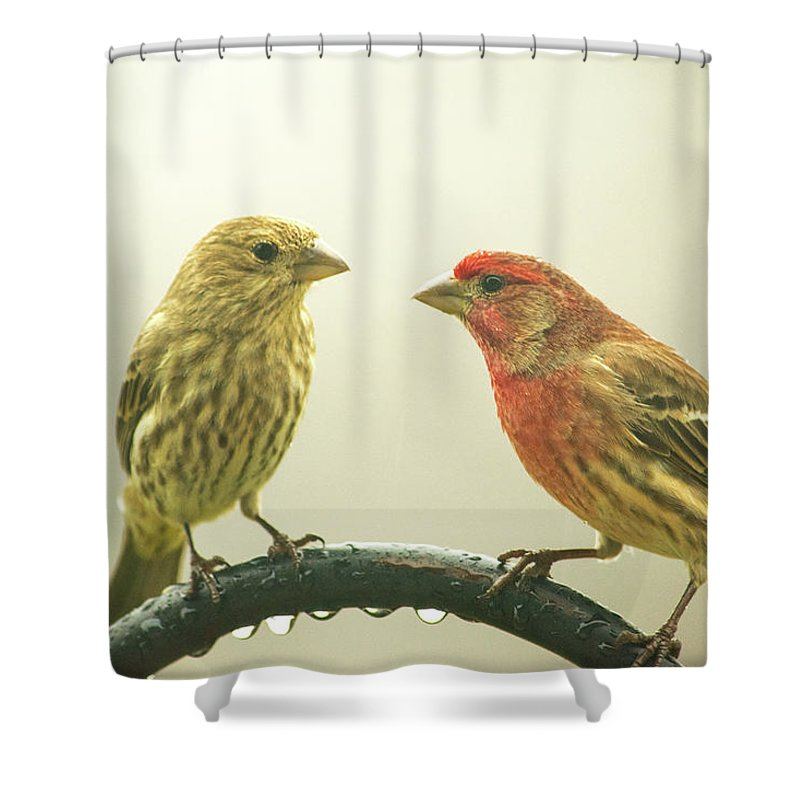 Birds Shower Curtain featuring the photograph Sweethearts by Carol Slocum