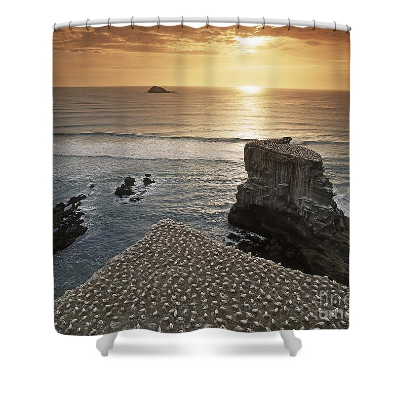 6x7 Shower Curtain featuring the photograph new zealand gannet colony at muriwai beach ,gannet fly from Muri by Juergen Held