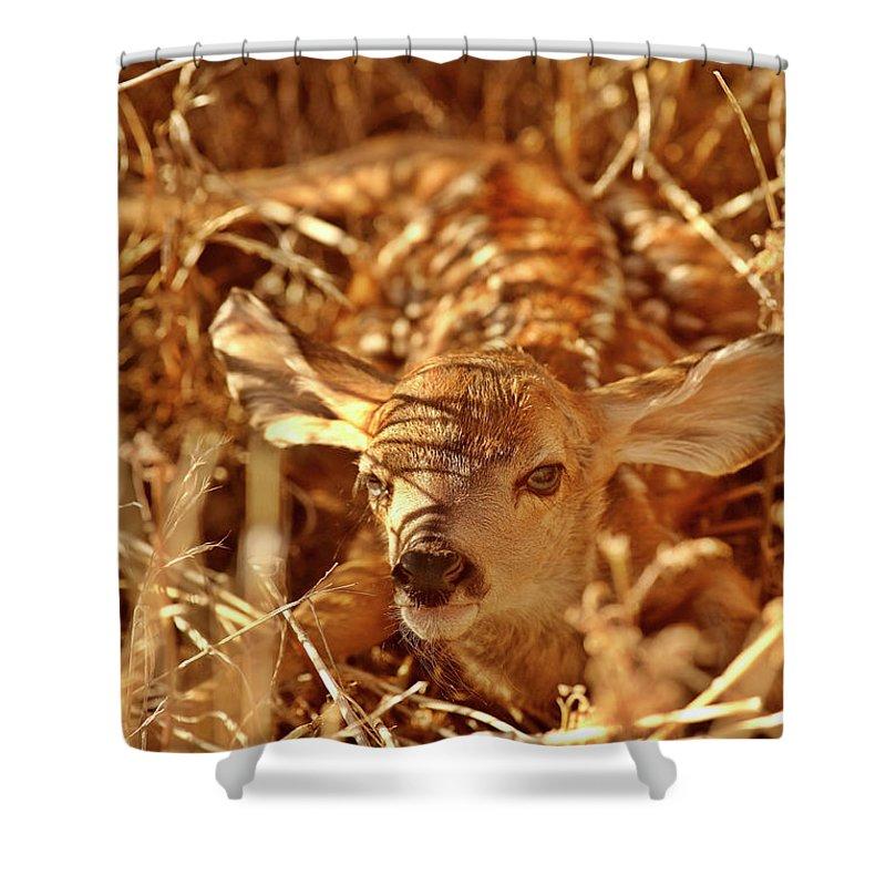 Shower Curtain featuring the digital art Newborn Fawn by Mark Duffy