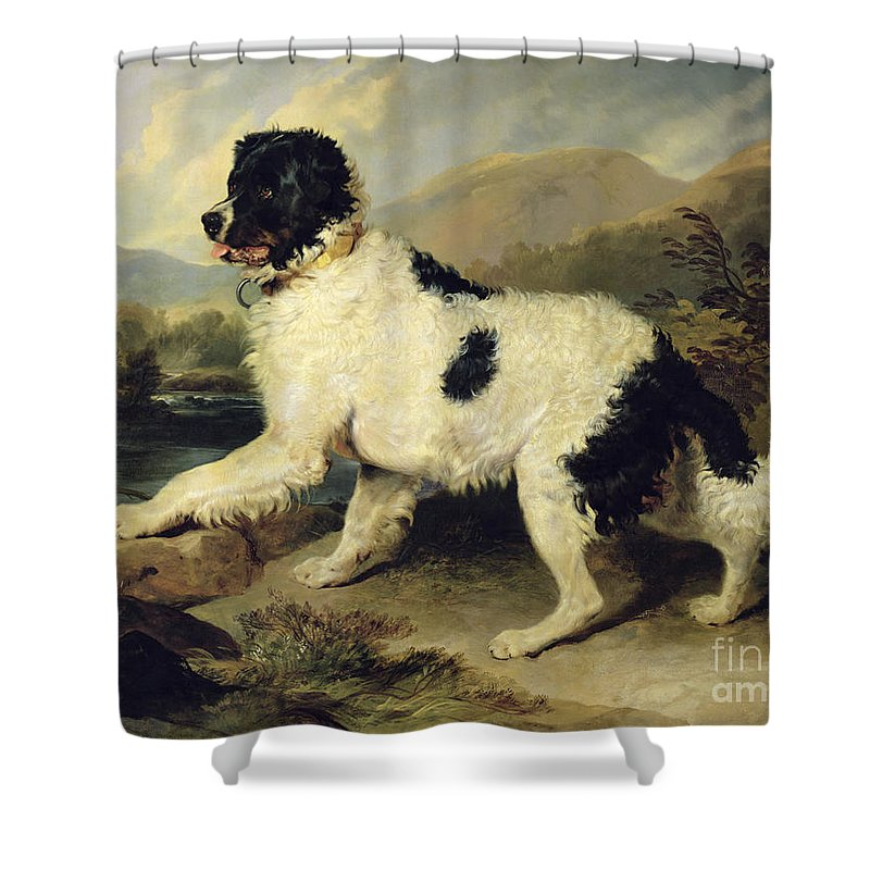Newfoundland Shower Curtain featuring the painting Newfoundland Dog Called Lion by Sir Edwin Landseer