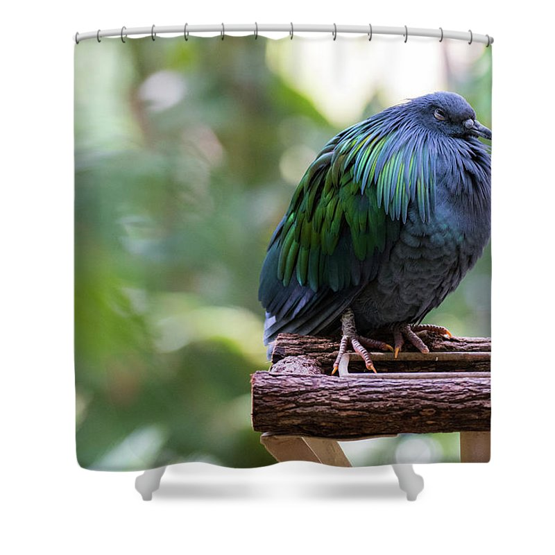 Nicobar Pigeon Shower Curtain featuring the photograph Nicobar Pigeon by Andrew Lelea