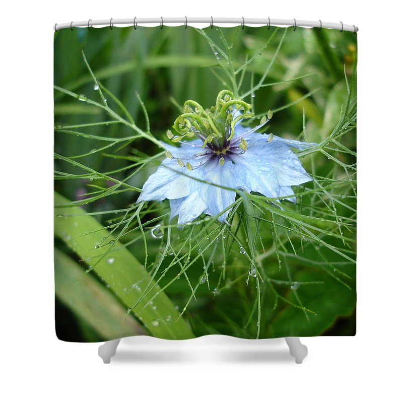 Flower Shower Curtain featuring the photograph Nigella In Spring Rain by Susan Baker
