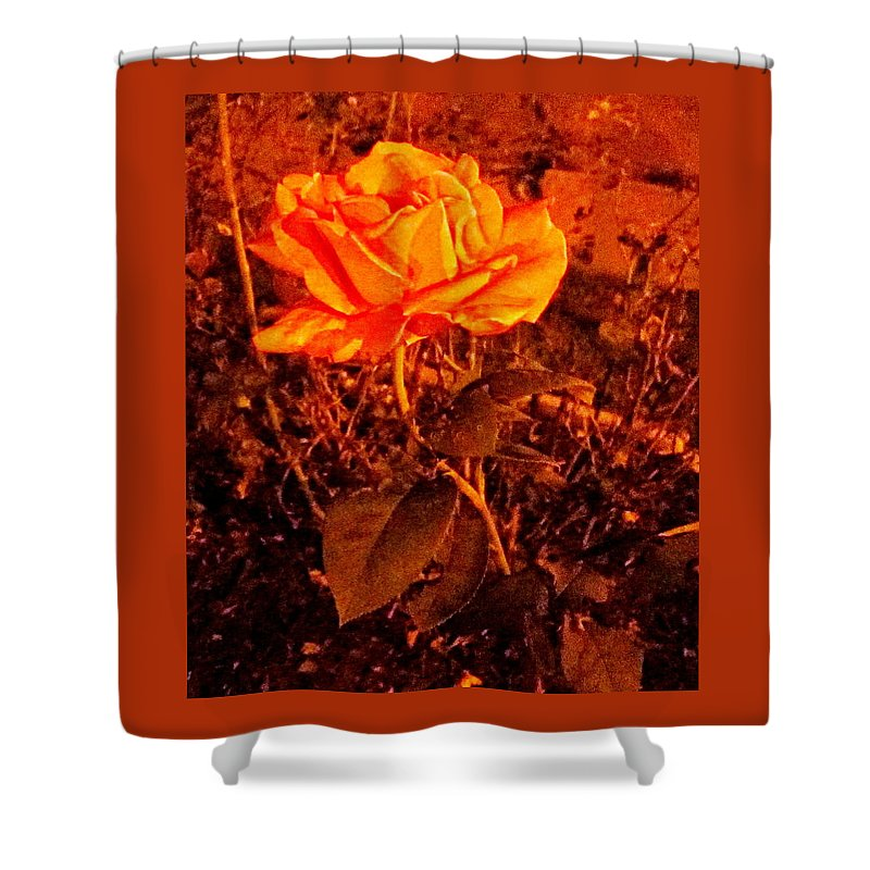 Rose Shower Curtain featuring the photograph Night Bloomer by Abby Humphries