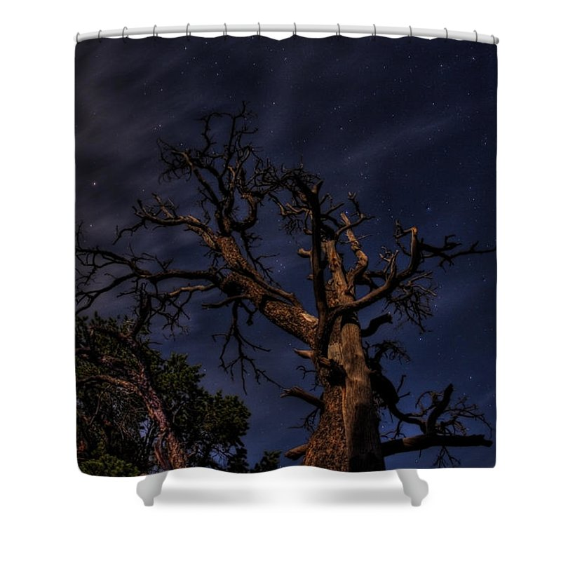 Stars Shower Curtain featuring the photograph Night Tree by Kris McGehee