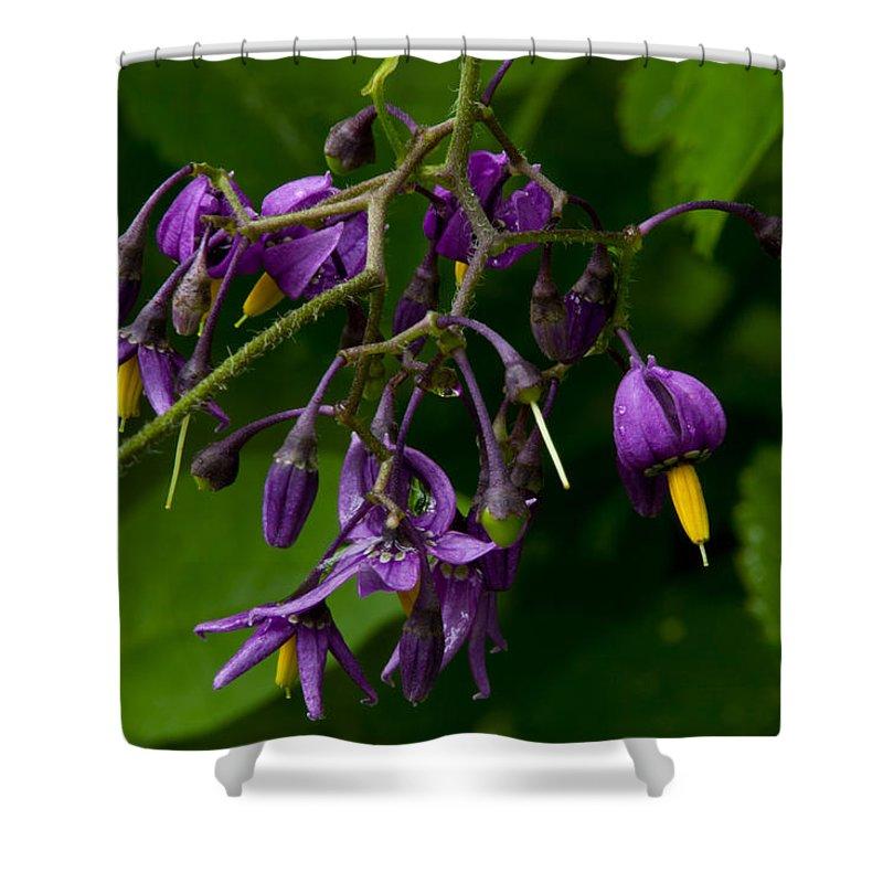 Wildflowers Shower Curtain featuring the photograph Nightshade Wildflowers #5607 by Irwin Barrett