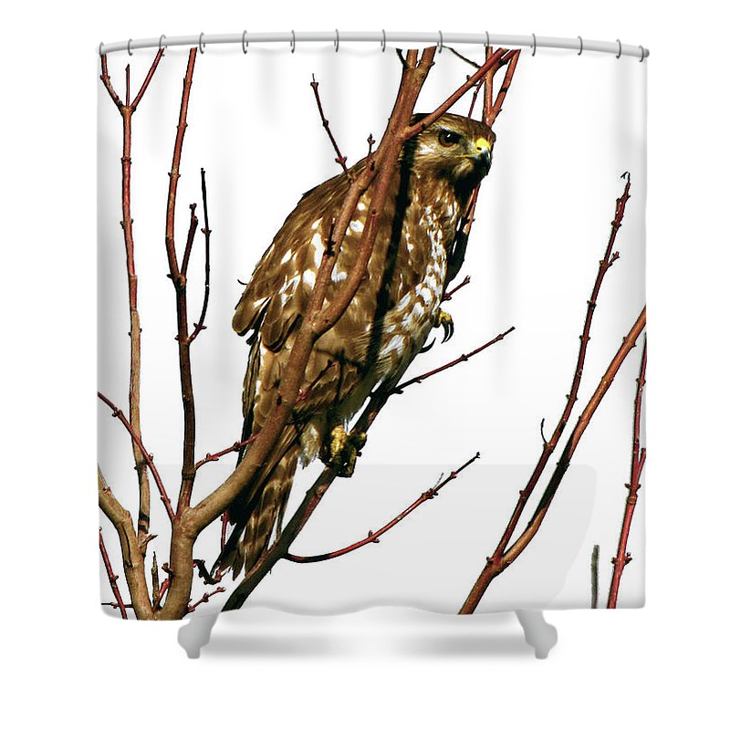 Nature Shower Curtain featuring the photograph No Place To Hide by Peg Urban