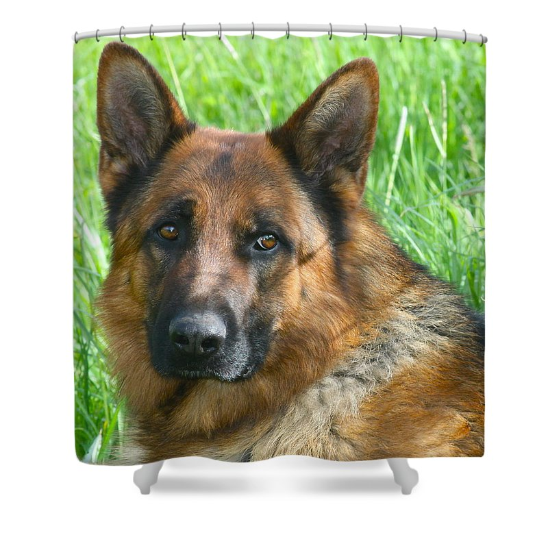 Dog Shower Curtain featuring the photograph Nobility by Karon Melillo DeVega