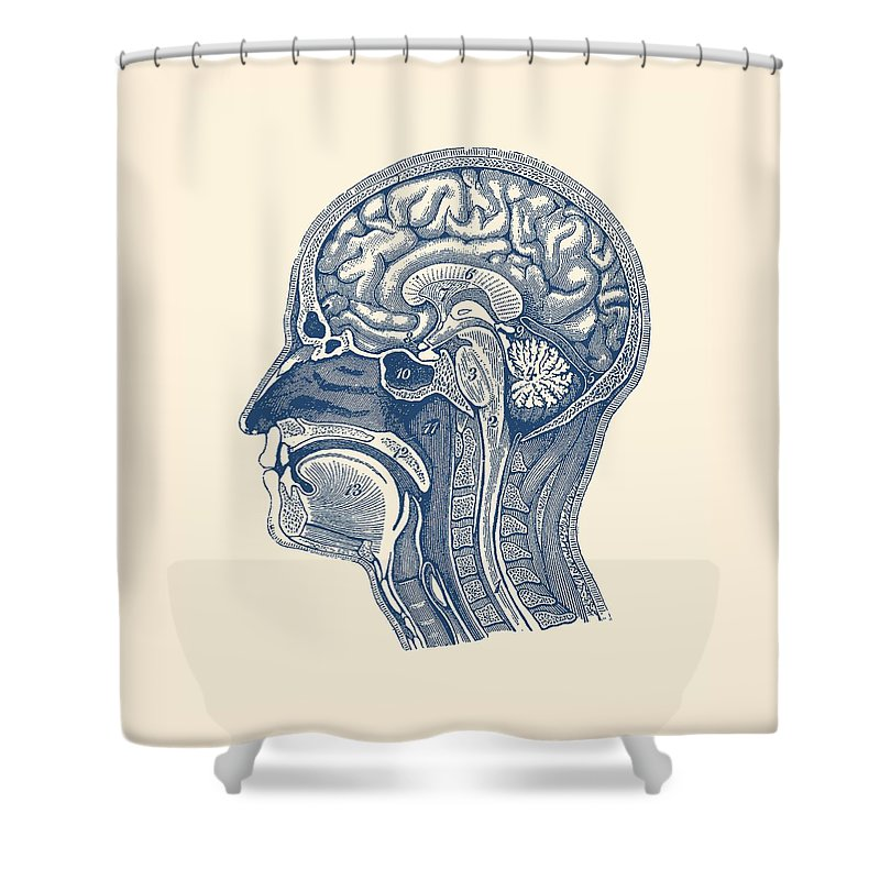 Normal Anatomy Of Human Brain