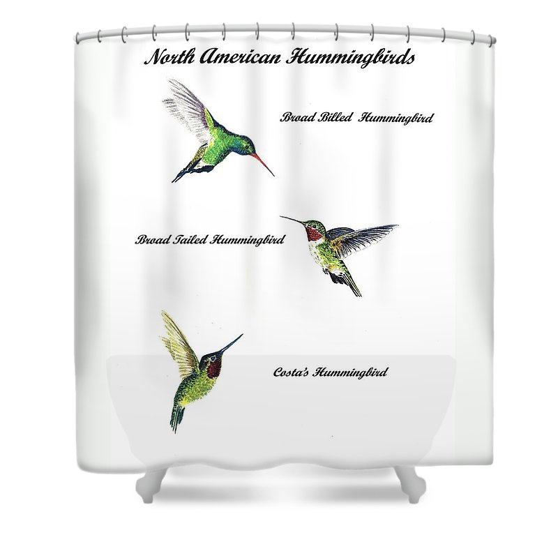 Animals Shower Curtain featuring the painting North American Hummingbirds by Michael Vigliotti