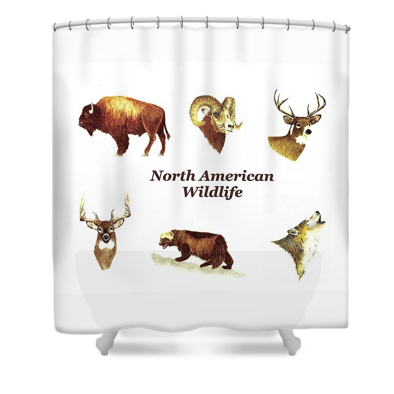 Animals Shower Curtain featuring the painting North American Wildlife by Michael Vigliotti
