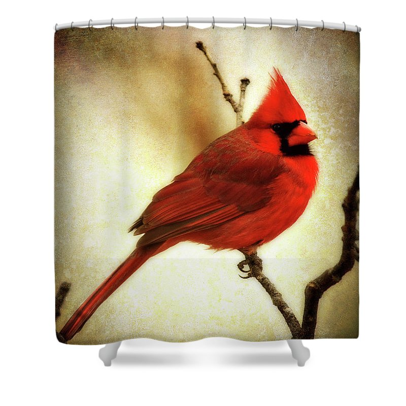 backyard Birds Shower Curtain featuring the photograph Northern Cardinal by Lana Trussell