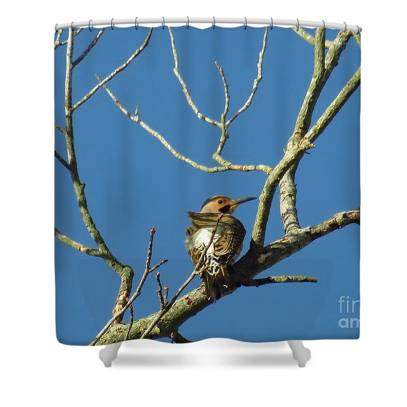 Bird Shower Curtain featuring the photograph Northern Flicker by Rrrose Pix