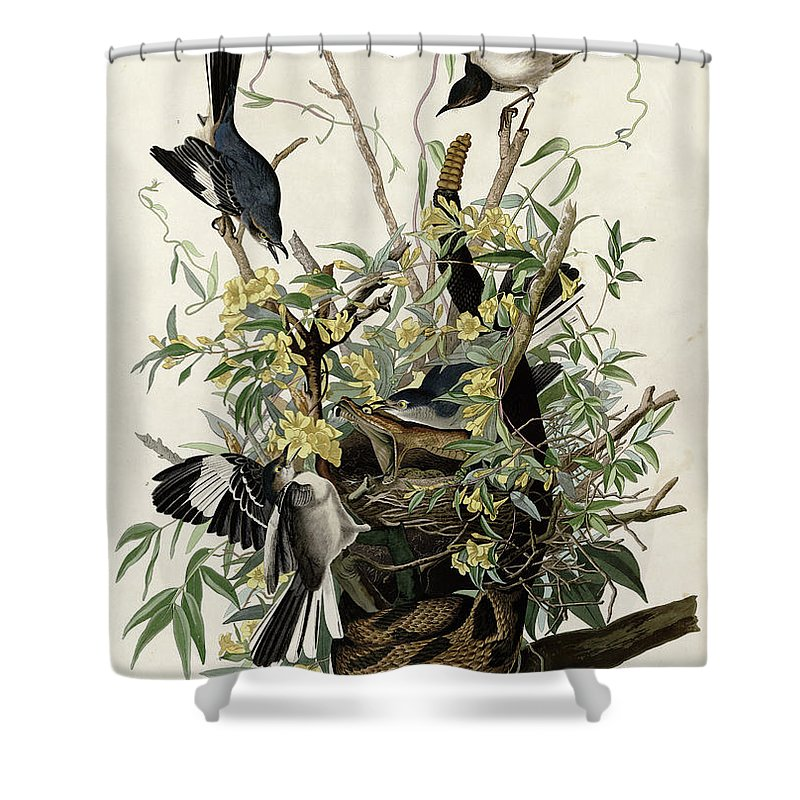 1858 Shower Curtain featuring the photograph Northern Mockingbird by Granger