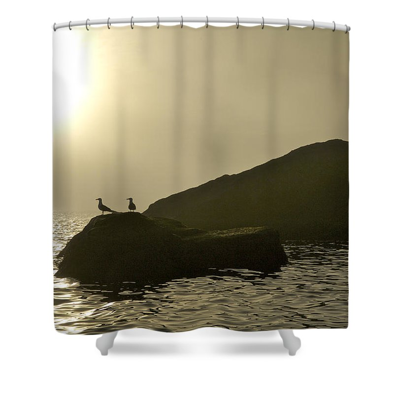 Animals In The Wild Shower Curtain featuring the photograph Norway, Tromso, Silhouette Of Pair by Keenpress
