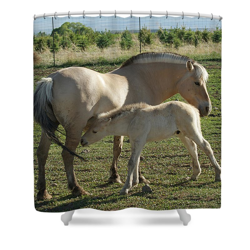Norwegian Fjord Horse Shower Curtain featuring the photograph Norwegian Fjord Horse And Colt by Ernie Echols