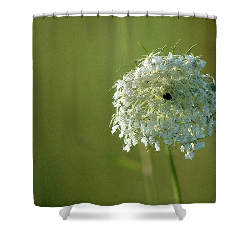 Nature Shower Curtain featuring the photograph Not Just A Weed by Trish Hale