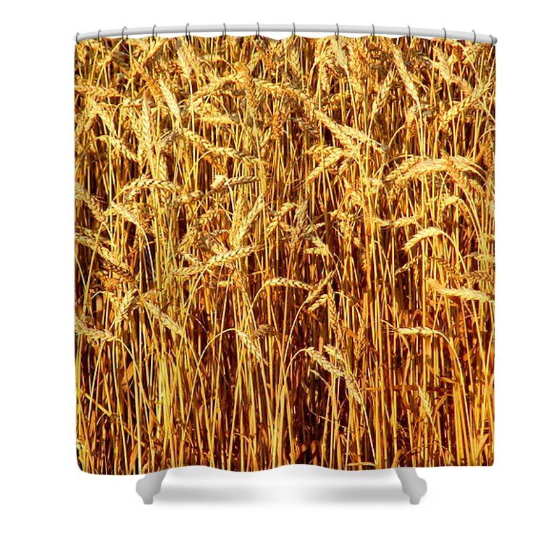 Not Just In Kansas Shower Curtain featuring the photograph Not Just In Kansas by Edward Smith
