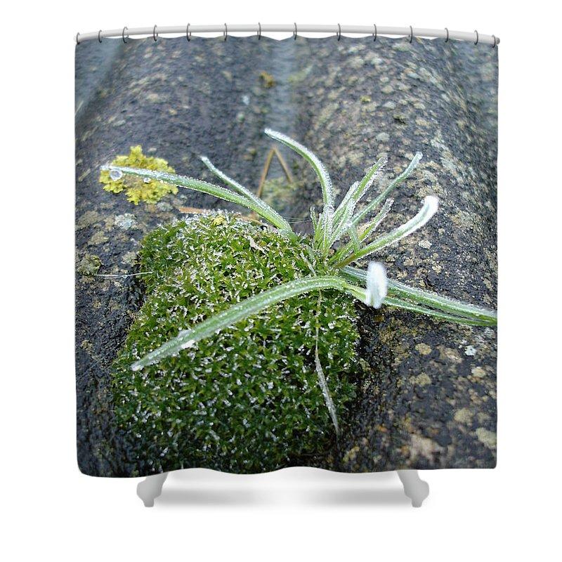 Green Shower Curtain featuring the photograph Not quite a roof garden by Susan Baker