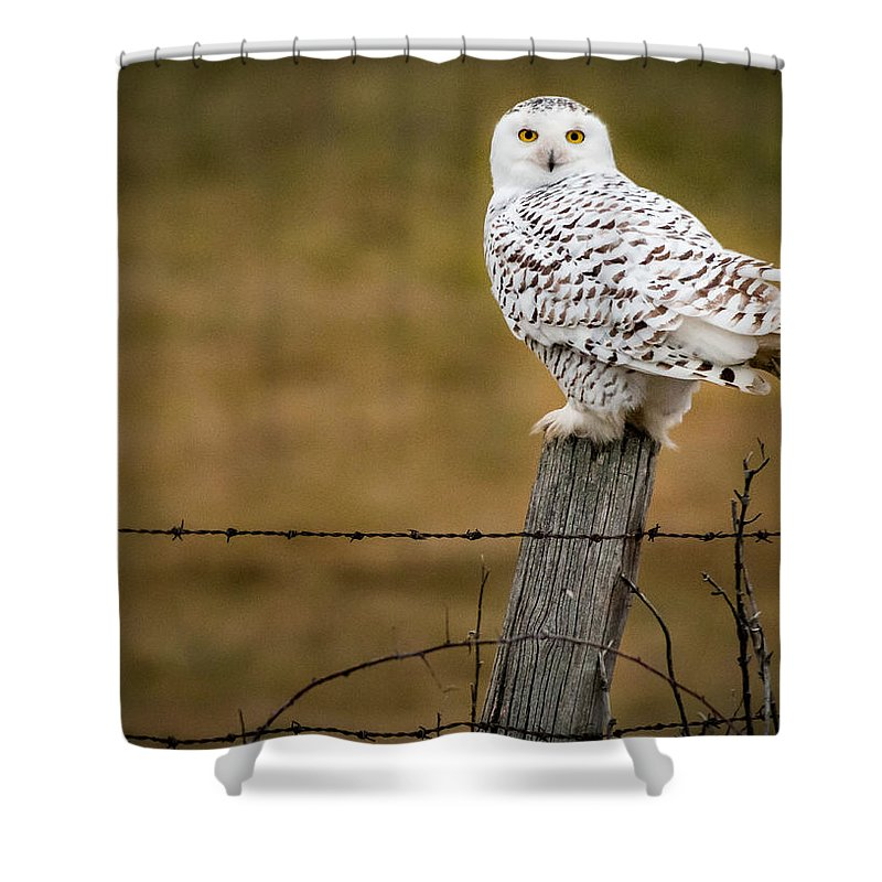 Snowy Owl Shower Curtain featuring the photograph Not Sharing This Post by Sandy Roe