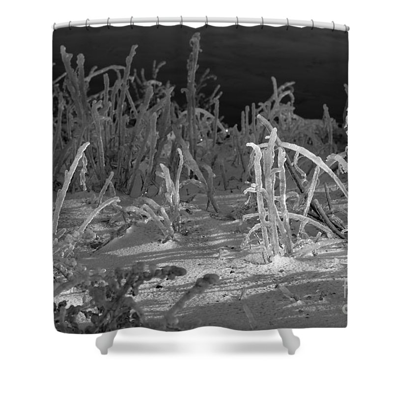 Black And White Shower Curtain featuring the photograph Not What It Seems by Amanda Barcon