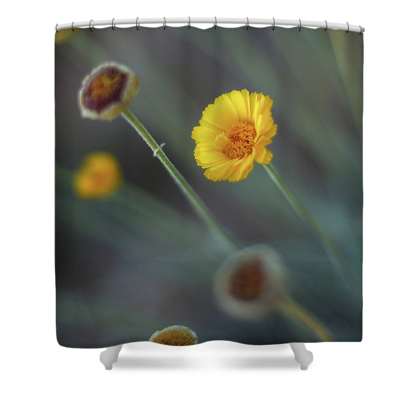 Yellow Shower Curtain featuring the photograph Nothing Gold Can Stay by Martina Schneeberg-Chrisien