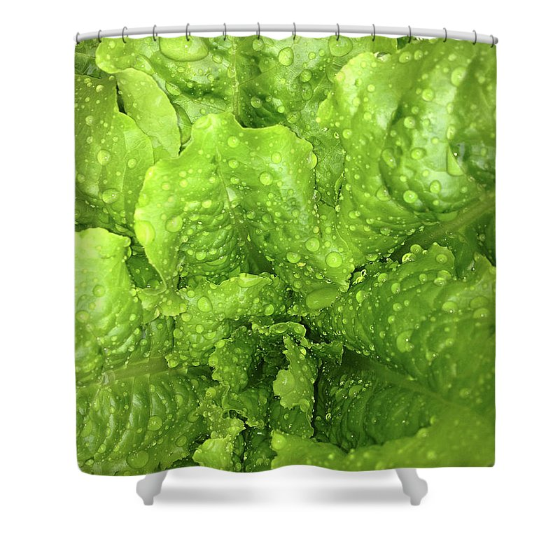 Floral Shower Curtain featuring the photograph Nourish In Green by Nia Kellogg