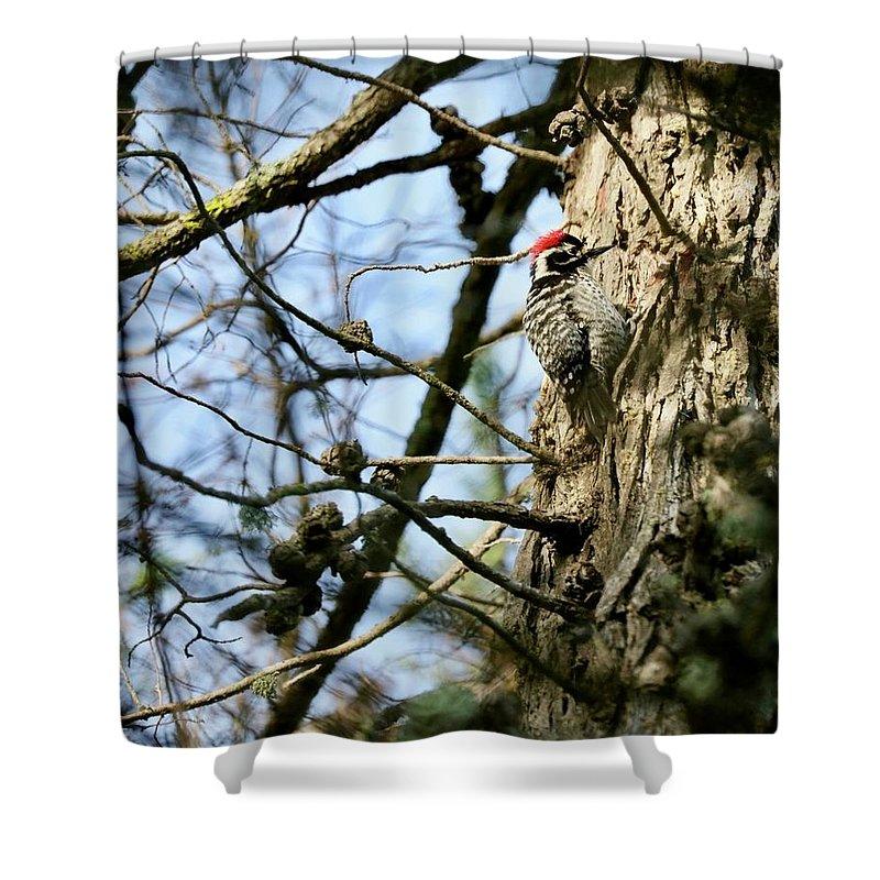 Bird Shower Curtain featuring the photograph Nuttalls Woodpecker by DUG Harpster