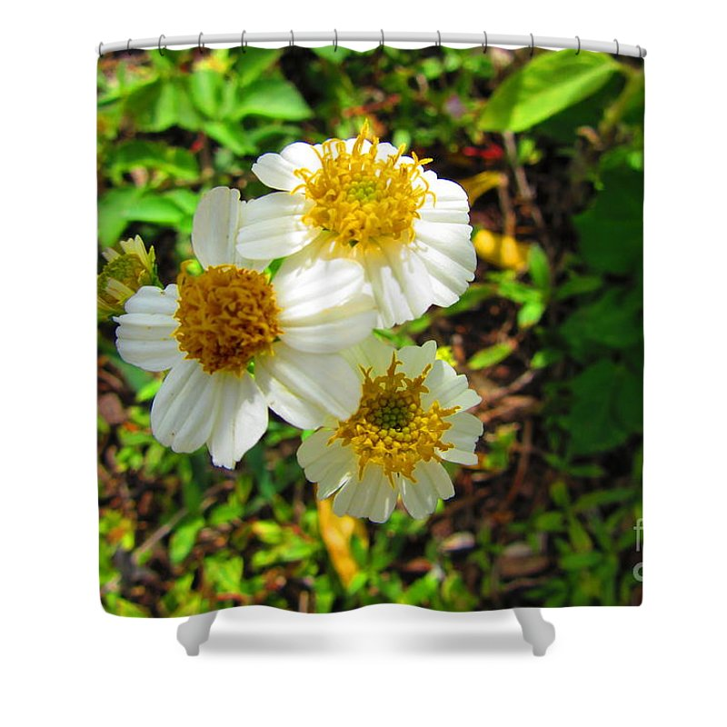 Wildflower Shower Curtain featuring the photograph Nuzzers by ChaNooga Annie