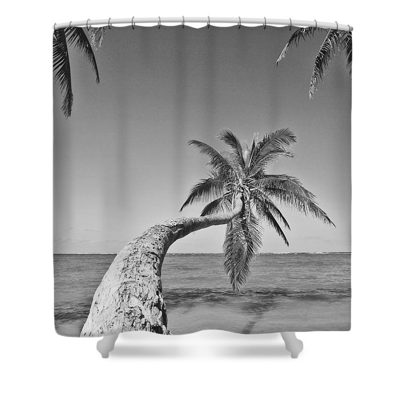 Afternoon Shower Curtain featuring the photograph Oahu Palms by Tomas del Amo - Printscapes