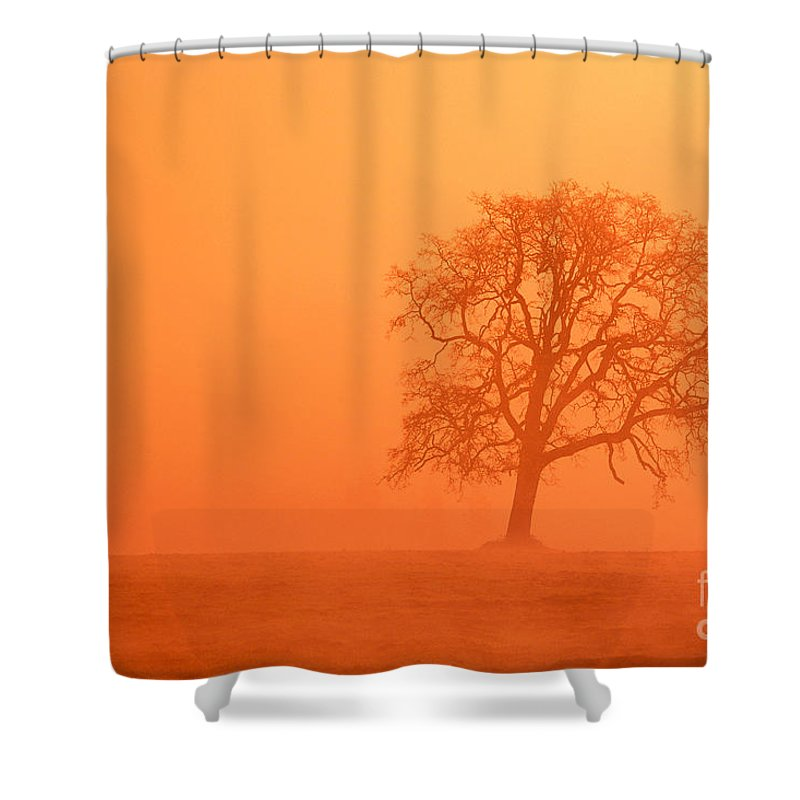 Bare Shower Curtain featuring the photograph Oak At Sunrise by Greg Vaughn - Printscapes