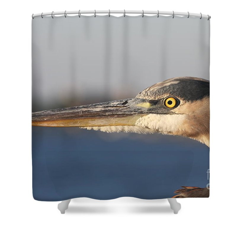 Heron Shower Curtain featuring the photograph Observant Eye - Heron Portrait by Christiane Schulze Art And Photography