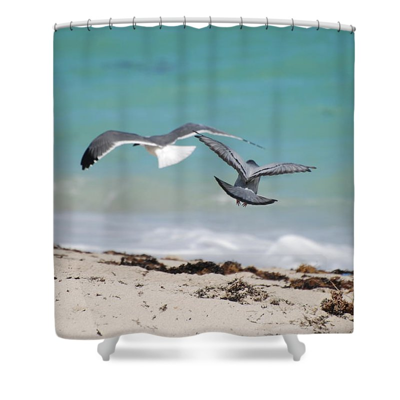 Sea Scape Shower Curtain featuring the photograph Ocean Birds by Rob Hans