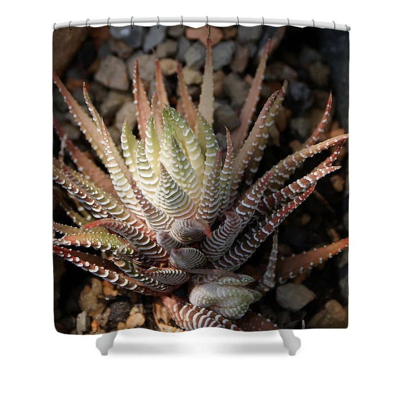 Cacti Shower Curtain featuring the photograph Octo Cacti by Shelley Jones