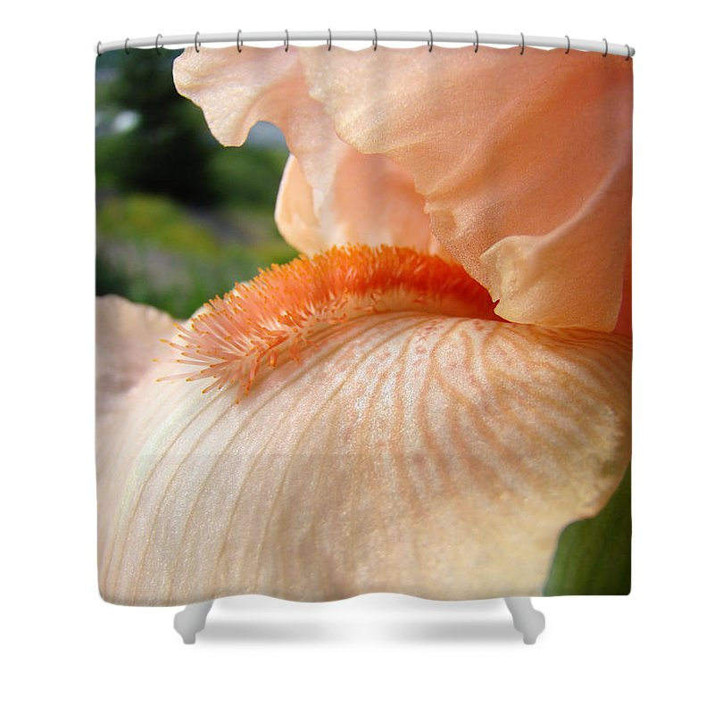 Office Art Prints Shower Curtain featuring the photograph Office Art Irises Orange Iris Flowers 9 Giclee Prints Corporate Art Baslee Troutman by Baslee Troutman