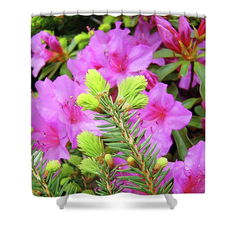 Office Shower Curtain featuring the photograph Office Art Pine Conifer Pink Azalea Flowers 38 Azaleas Giclee Art Prints Baslee Troutman by Baslee Troutman