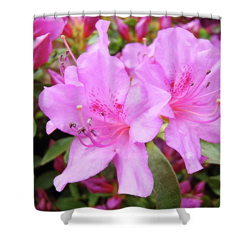 Flower Shower Curtain featuring the photograph Office Art Pink Azalea Flower Garden 3 Giclee Art Prints Baslee Troutman by Baslee Troutman