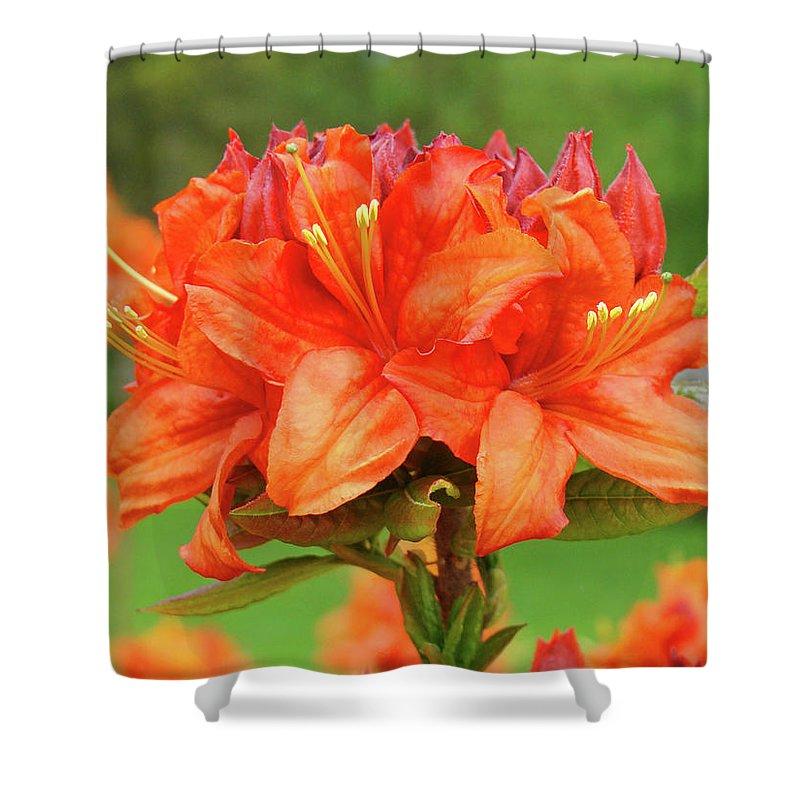 �azaleas Artwork� Shower Curtain featuring the photograph Office Art Prints Azaleas Botanical Landscape 11 Giclee Prints Baslee Troutman by Baslee Troutman
