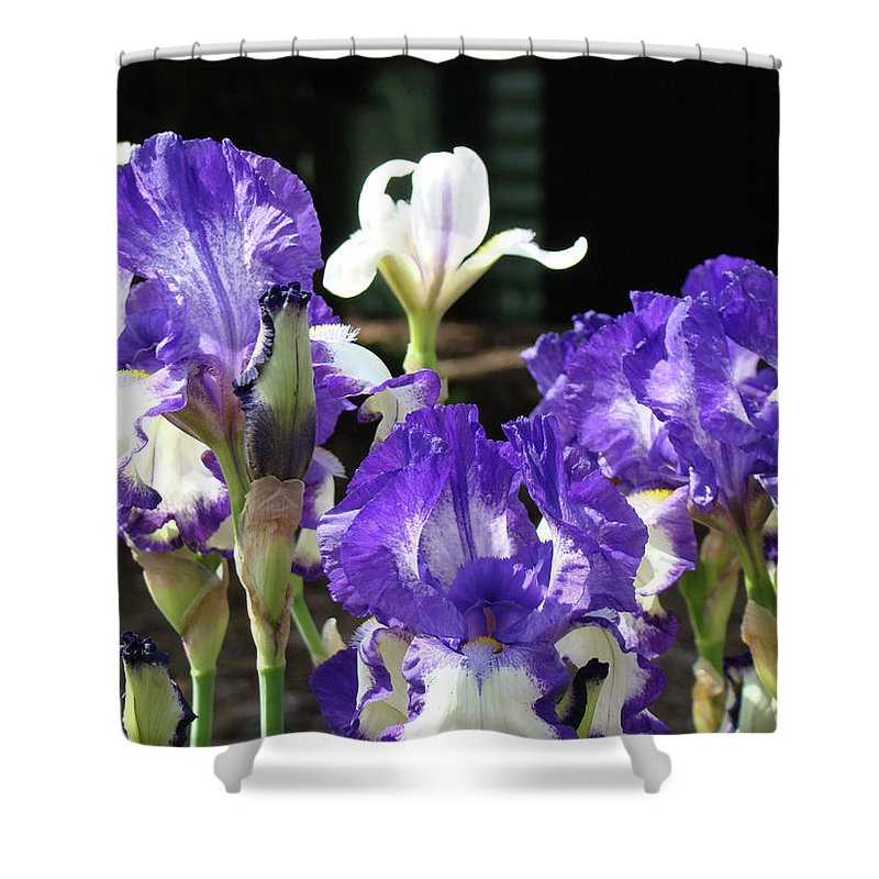 Iris Shower Curtain featuring the photograph Office Art Prints Iris Flower Botanical Landscape 30 Giclee Prints Baslee Troutman by Baslee Troutman