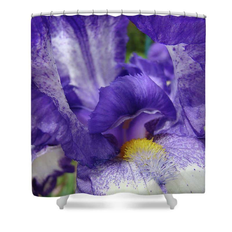 Office Shower Curtain featuring the photograph Office Art Prints Iris Flowers Purple White Irises 40 Giclee Prints Baslee Troutman by Baslee Troutman