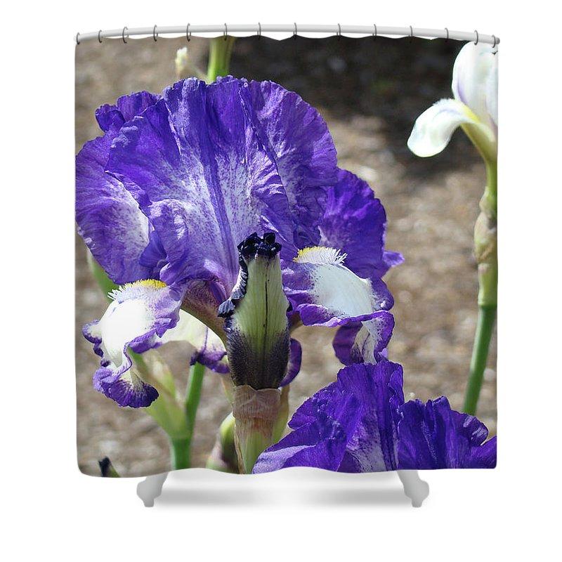 Office Shower Curtain featuring the photograph Office Art Prints Irises Flowers 46 Iris Flower Giclee Prints Baslee Troutman by Baslee Troutman