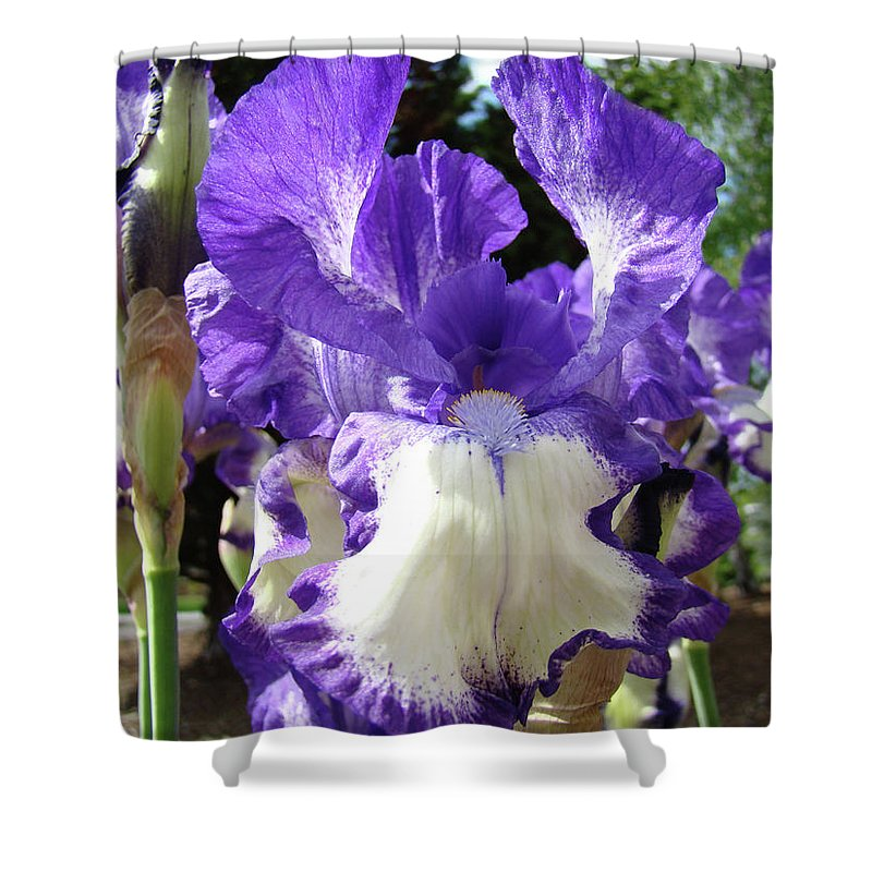 Floral Shower Curtain featuring the photograph Office Art Prints Irises Purple White Iris Flowers 39 Giclee Prints Baslee Troutman by Baslee Troutman