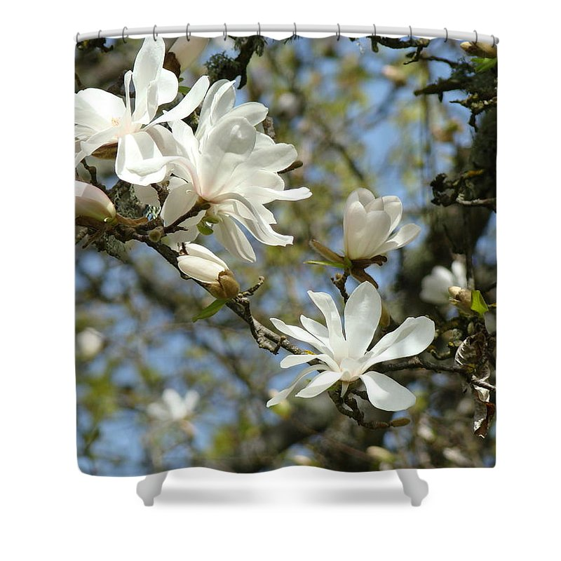 Magnolia Shower Curtain featuring the photograph Office Art Prints Magnolia Tree Flowers Landscape 15 Giclee Prints Baslee Troutman by Baslee Troutman